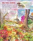Könyv - Keresd meg a különleges állatokat!